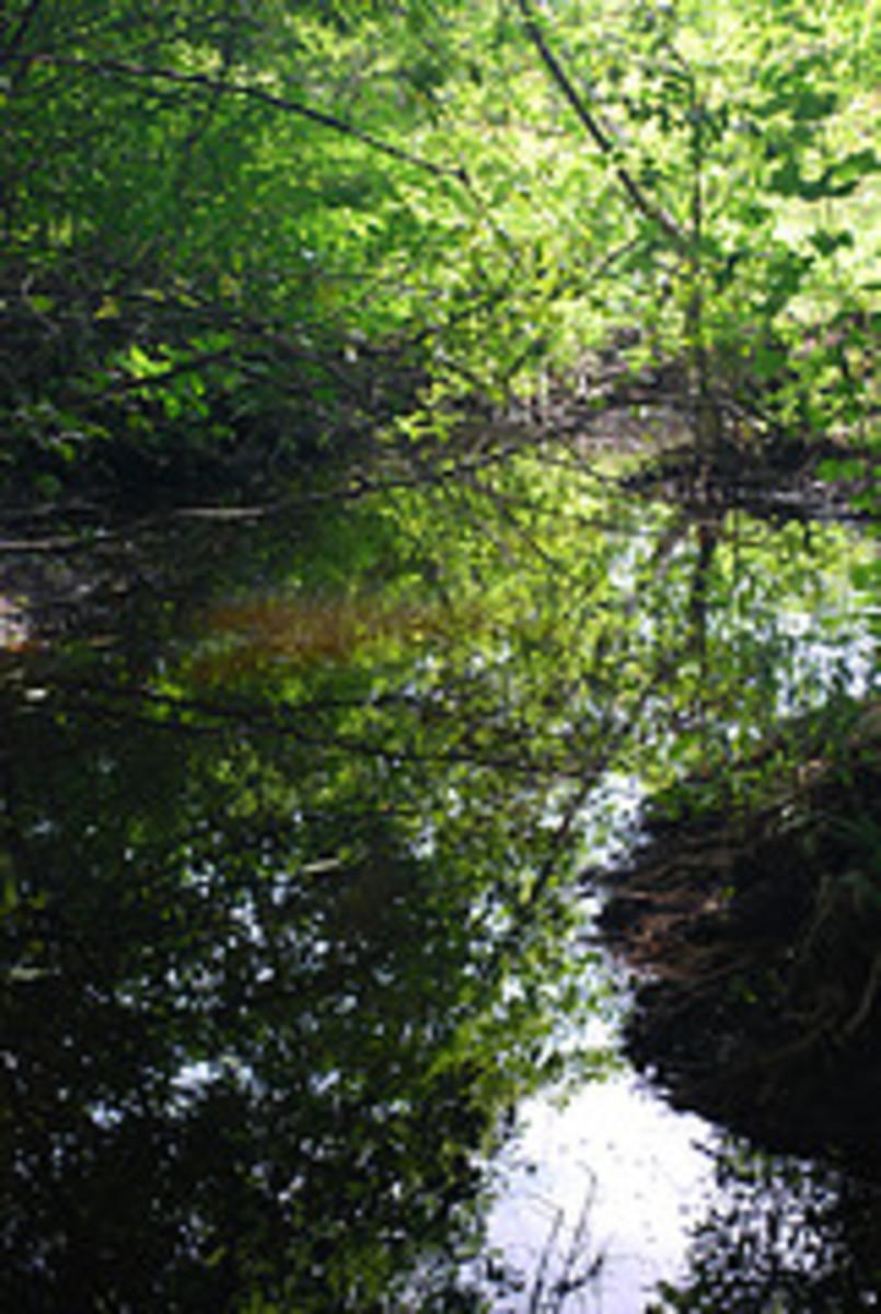 Beautiful woodland stream.