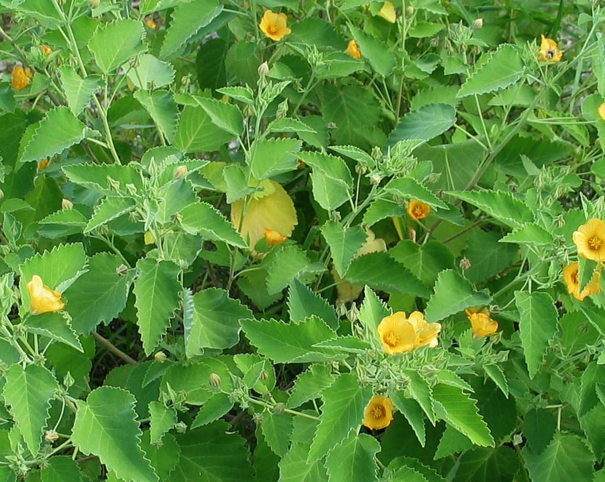 into overgrowing adult plants....