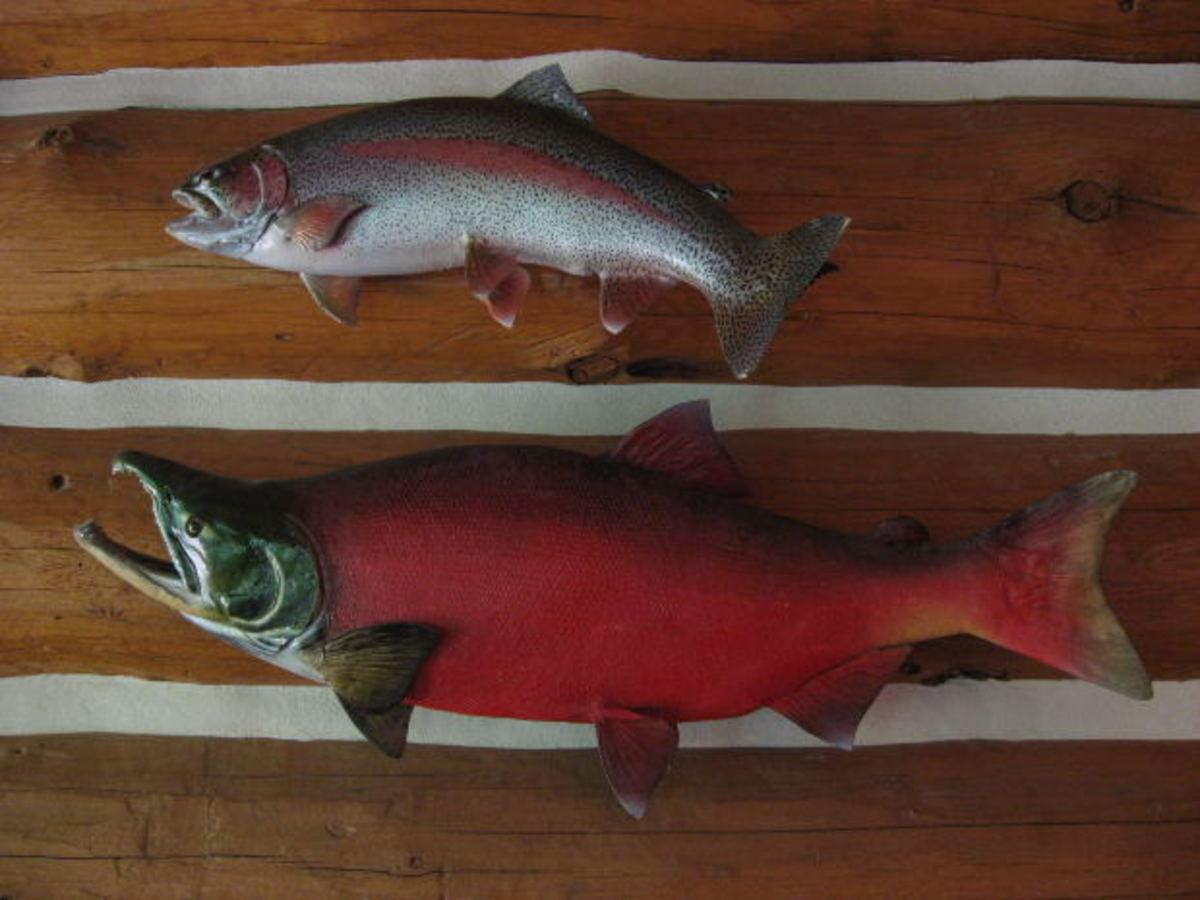 Simple Salmon Recipes