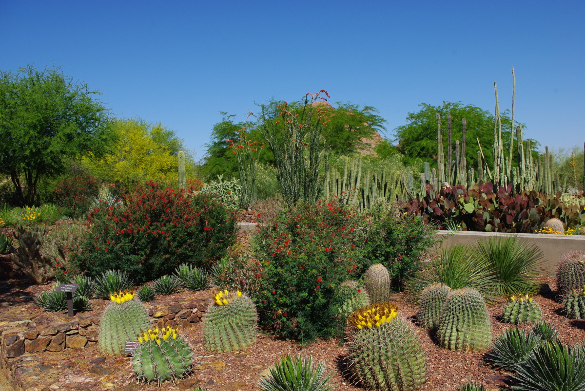 Desert plants, like cacti are adapted to drought an arid wheather conditions.