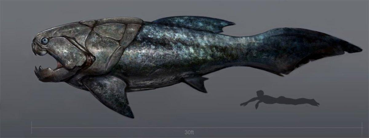 Dunkleosteus size comparison