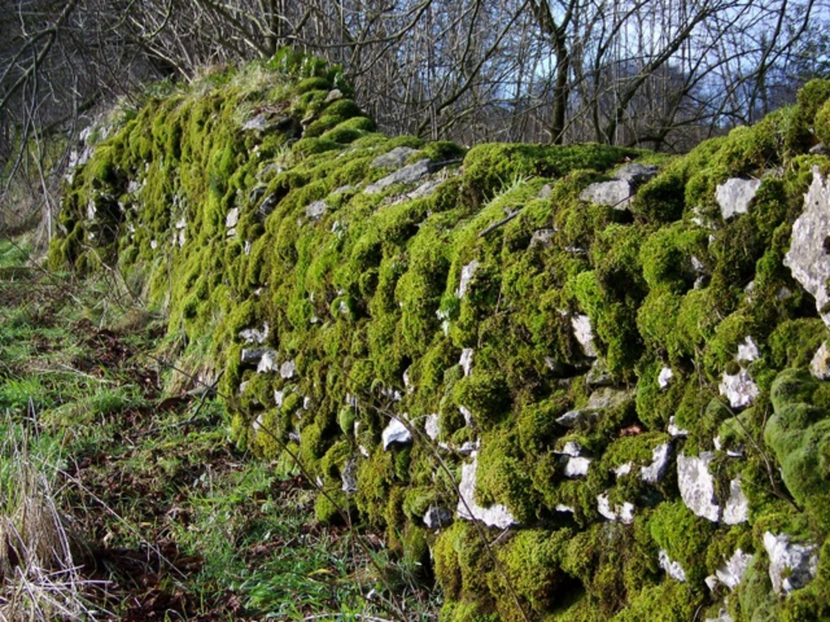 "What does ""a rolling stone gathers no moss"" mean? Source: http://commons.wikimedia.org/wiki/File:Moss_covered_stone_wall,_Ubley_-_geograph.org.uk_-_1671489.jpg"