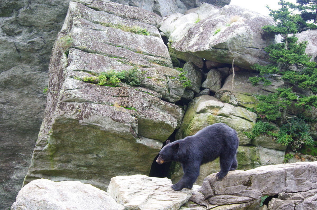How to protect yourself from a bear attack while hiking in spring season