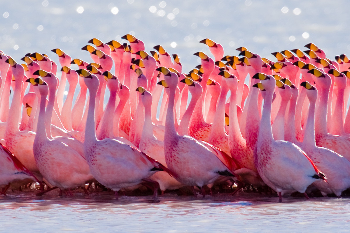 A flock of flamingos with that beautiful bright pink color that they are known for.