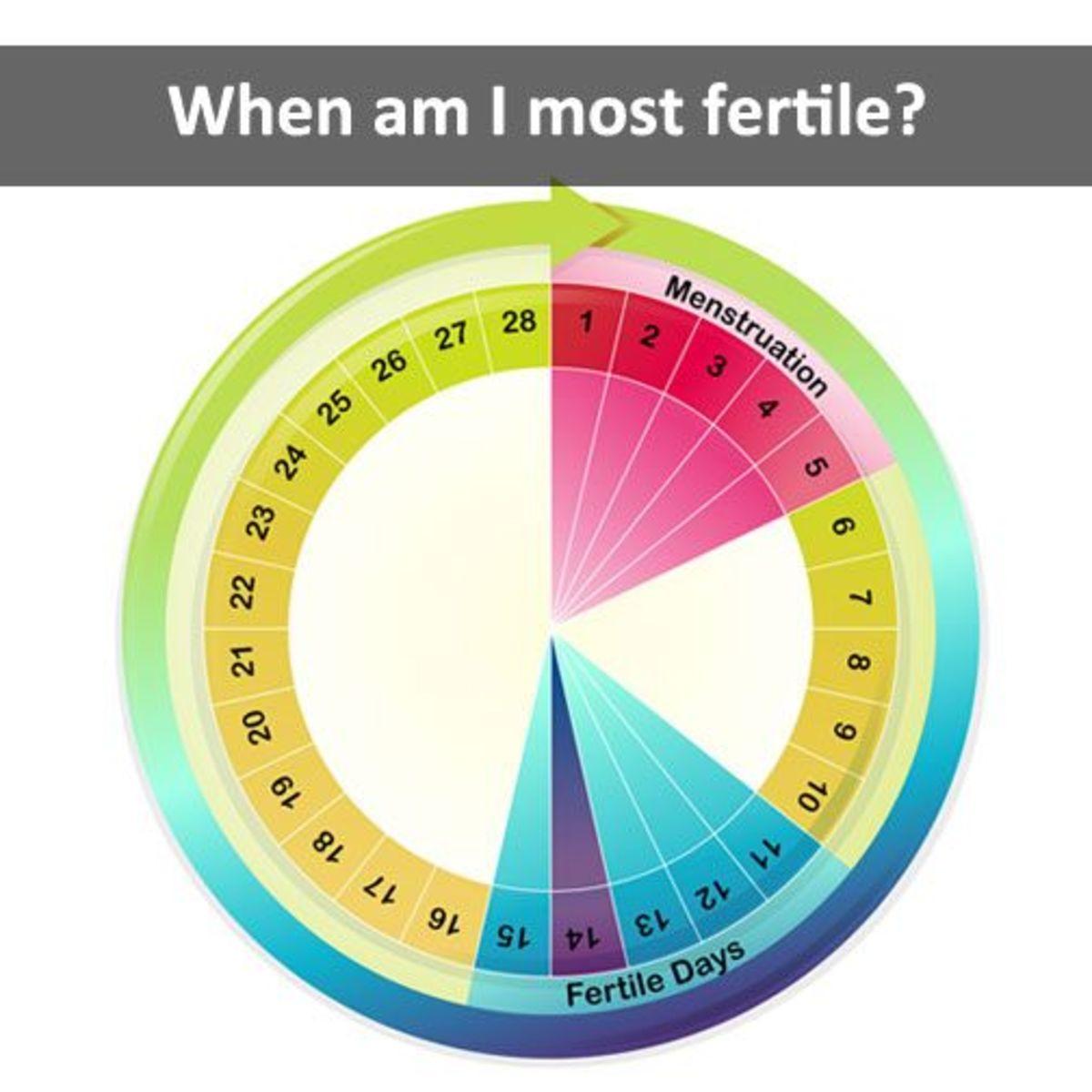 when-do-i-ovulate