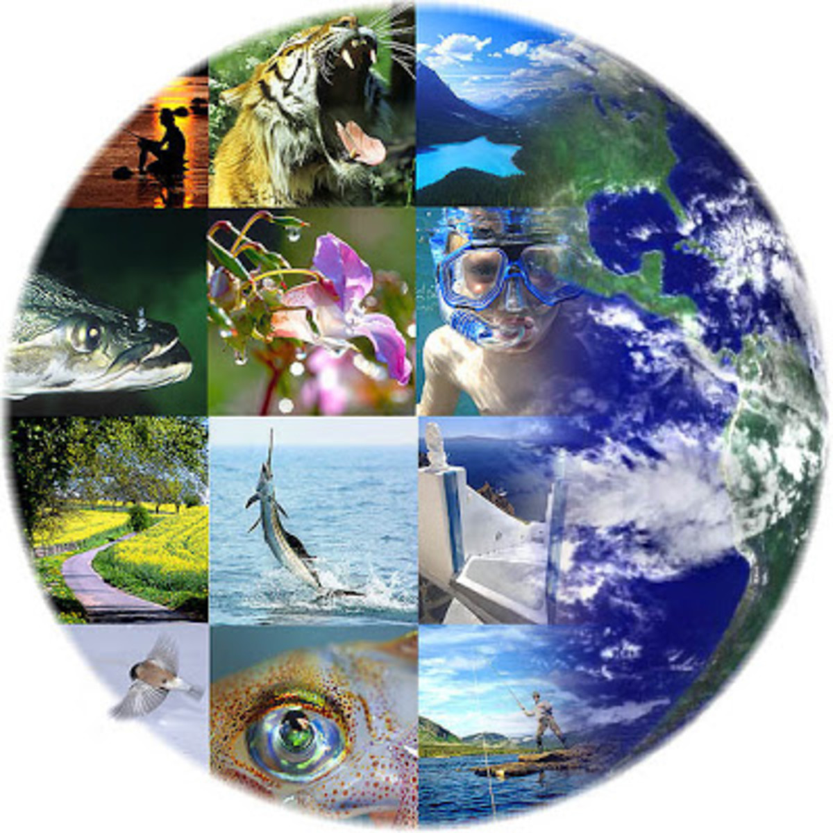 Species extinction and degradation of ecosystems are increasing due to climate change