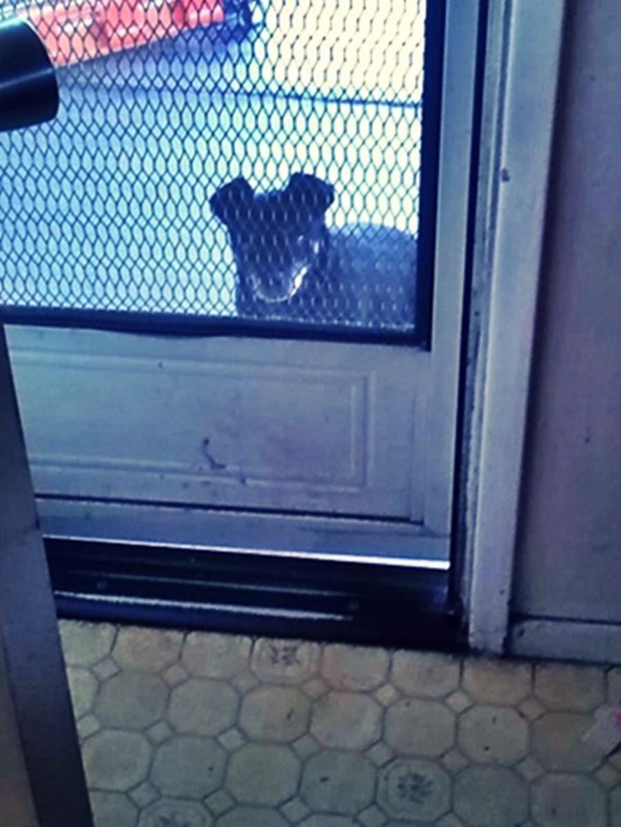 Shadow peering through the screen door.