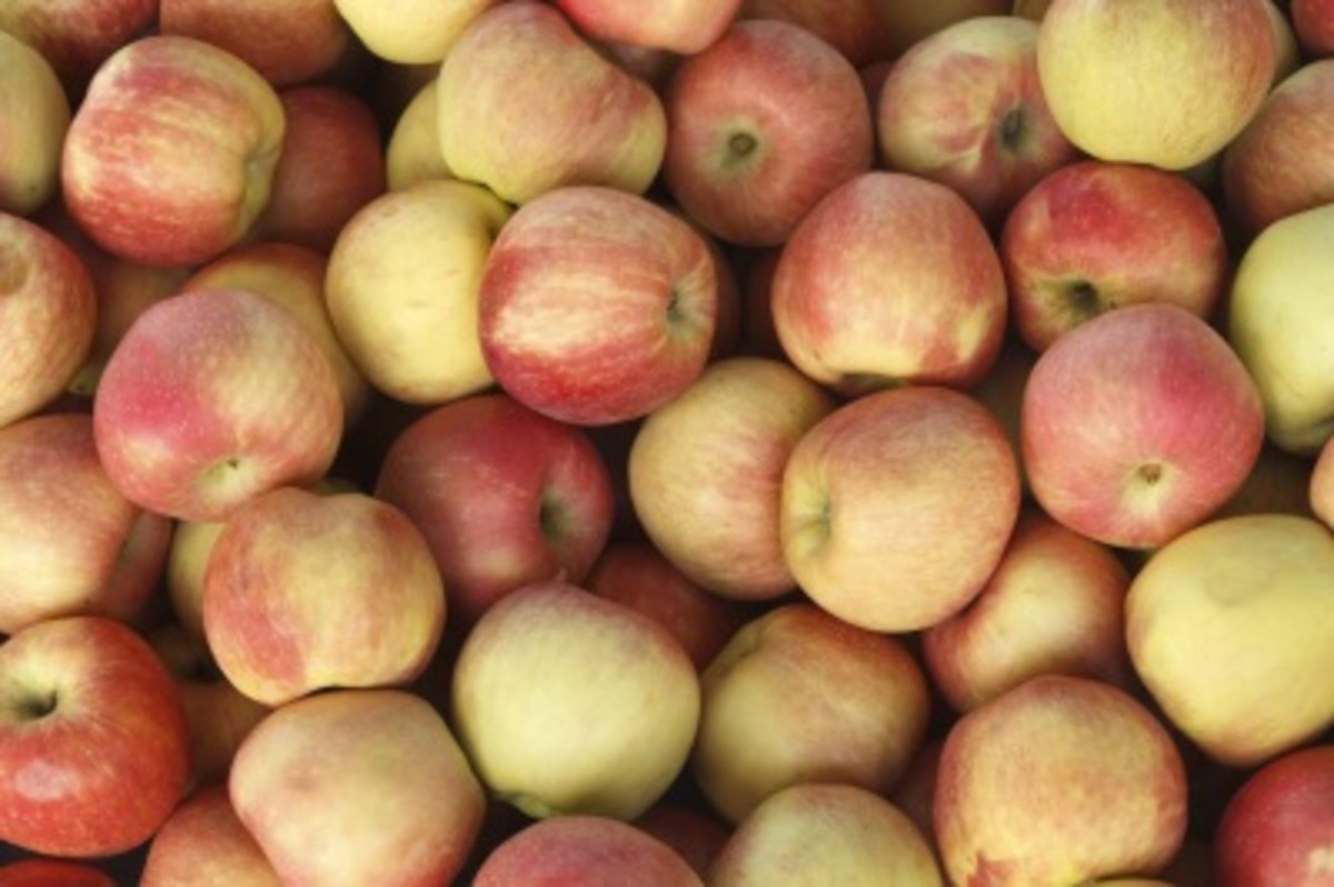 20 Apple Recipes--What to Do With So Many Apples?