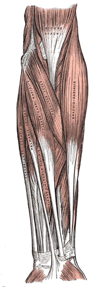 human-anatomy-lesson-23