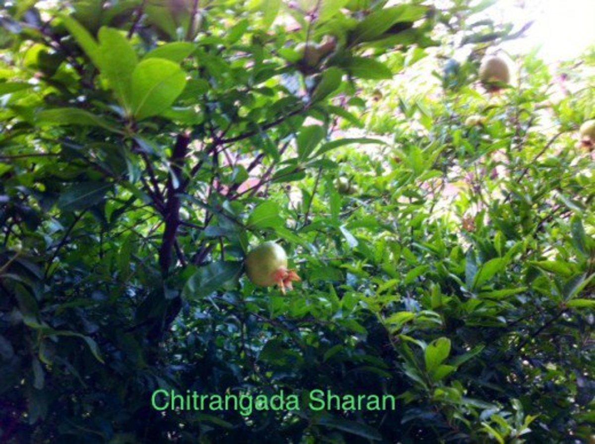 Nature provides abundantly