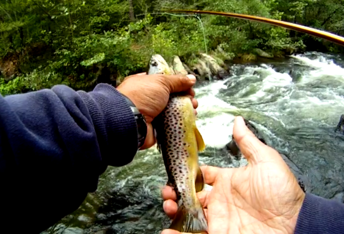 My First Brown Trout!