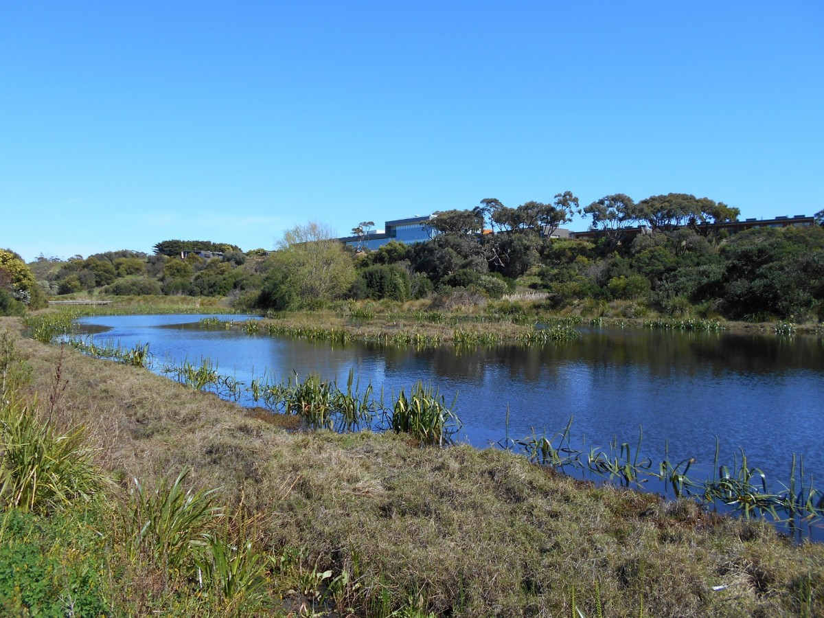 The wetlands at the RACV holiday resort. In the distance is the main building of RACV.