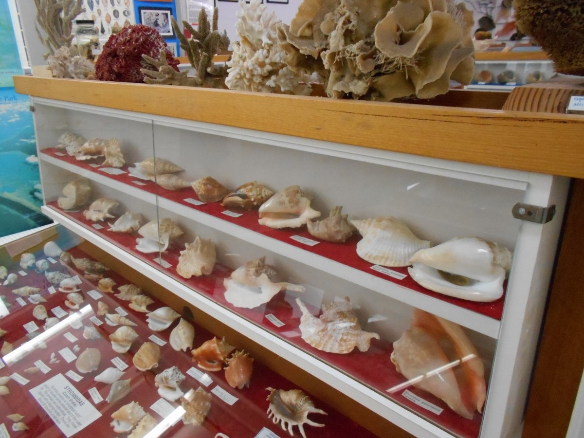 Specimens of shells and other artefacts on display in the Shell Museum in Inverloch.