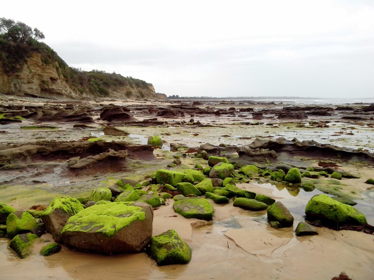 Beautiful views of the rocky beaches during low tides near The Caves in Inverloch.