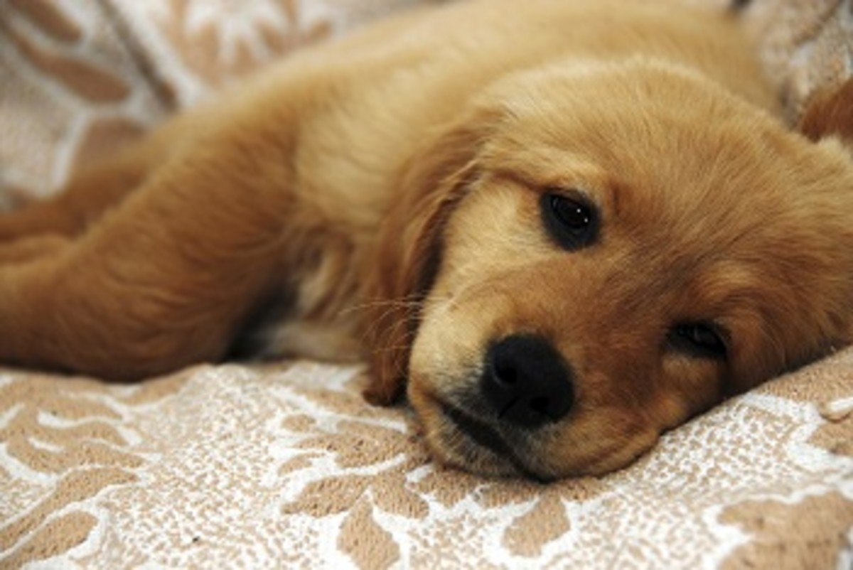 Can Medication Cause Blood In Stool In Dogs