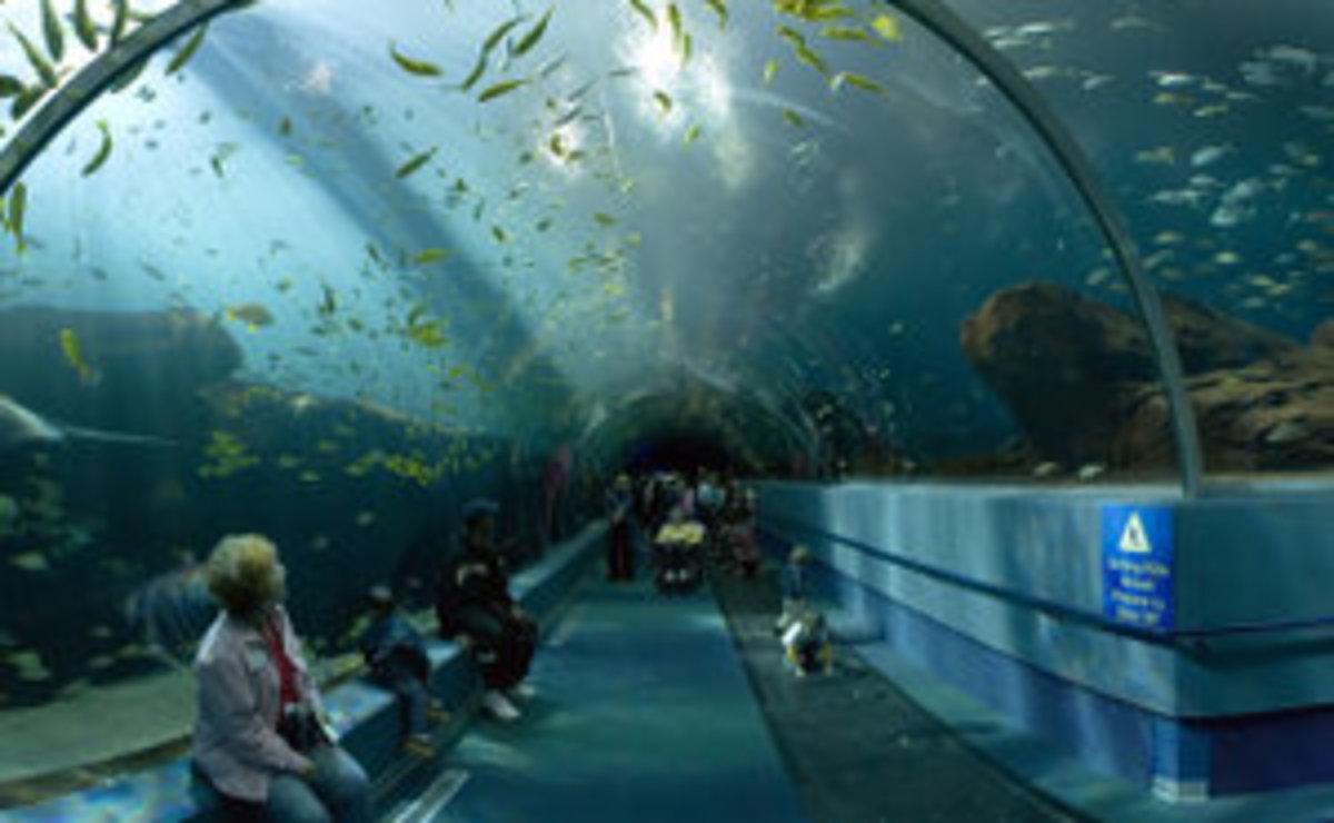 Amazing tunnel in Georgia Aquarium