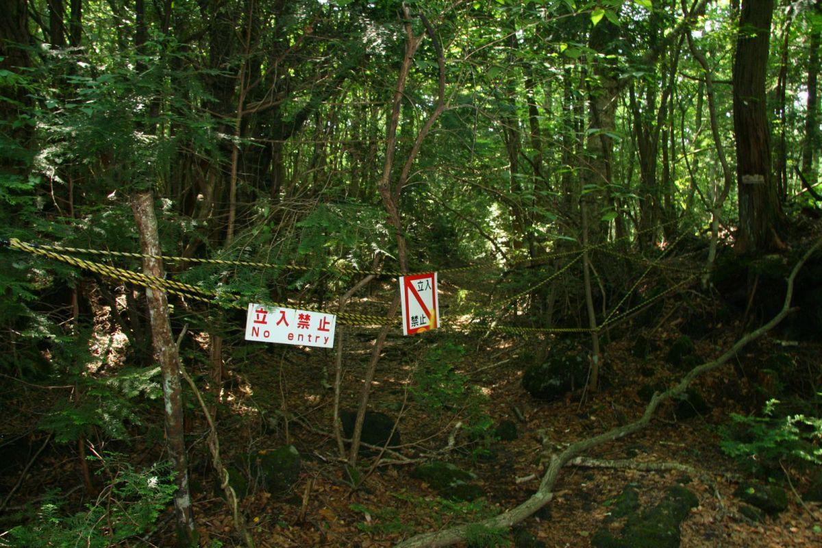 Aokigahara Jungle