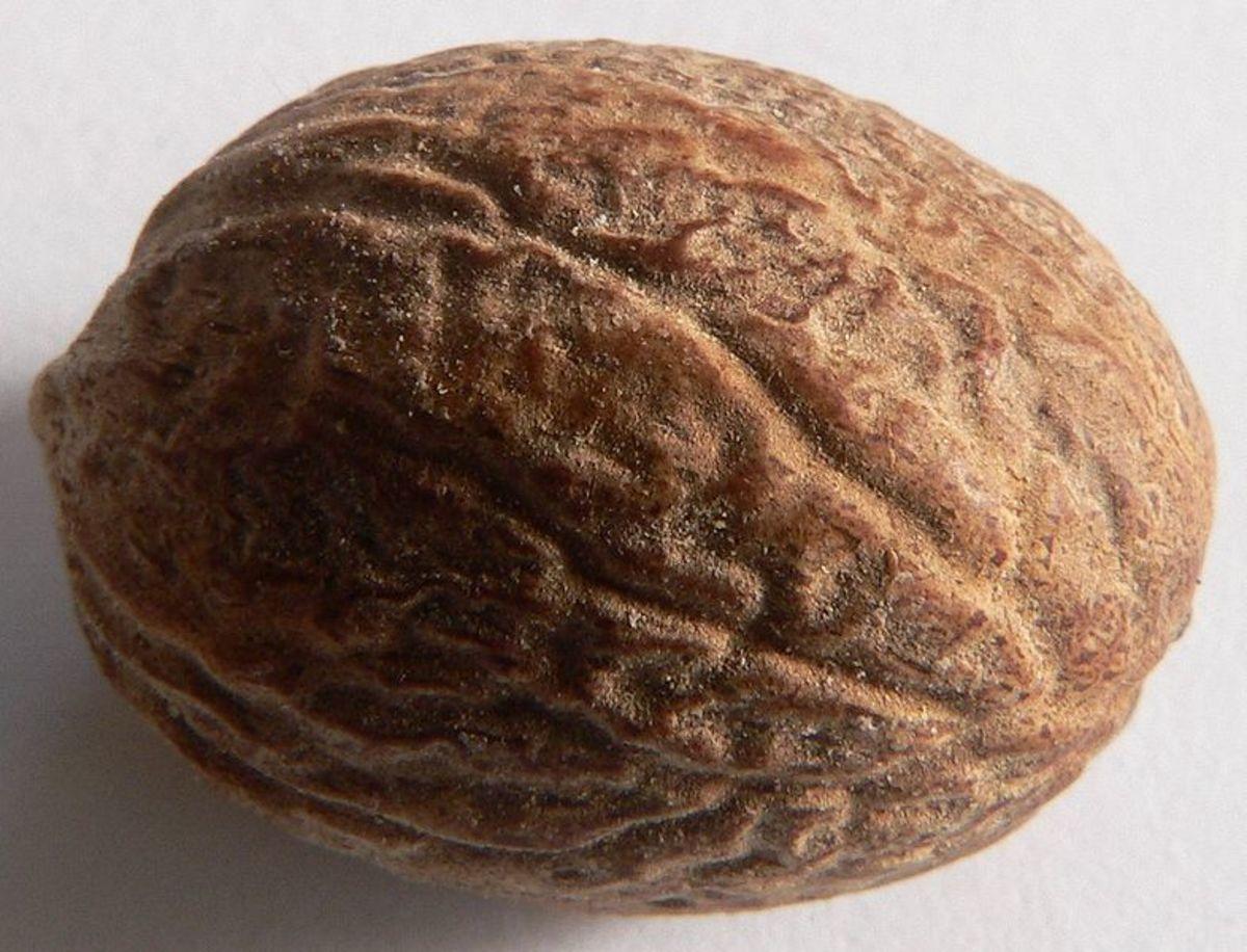 Nutmeg (Jaiphal) & Nutmeg Essential Oil - Health & Nutritional Benefits