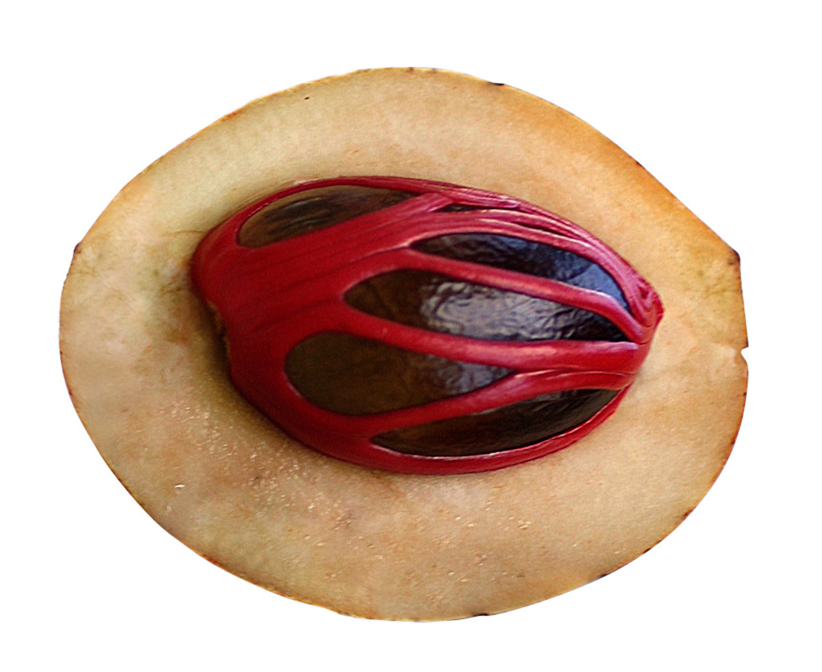A Cut Section Of Nutmeg Fruit Showing The Seed And Mace (Javitri)