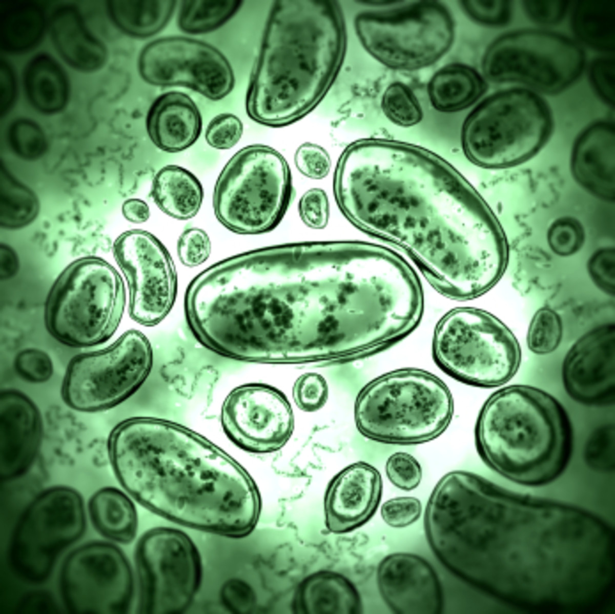 Less than 1 in 10 of your cells are human