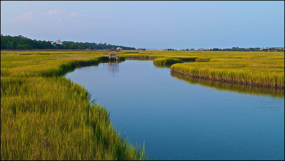 Pawleys Island estuary.
