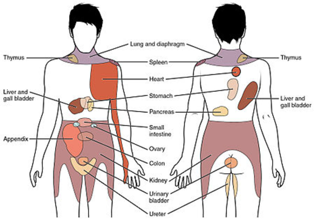 Pain from the chest and abdominal organs can radiate to distant parts of the body.