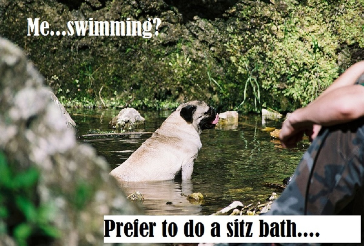 Are All Dogs Born Knowing How to Swim?