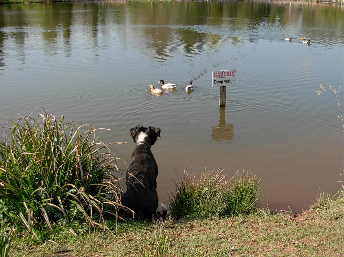 are-all-dogs-born-knowing-how-to-swim