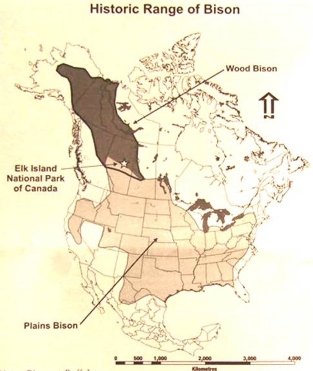 The Boundaries of where North American Bison roamed historically