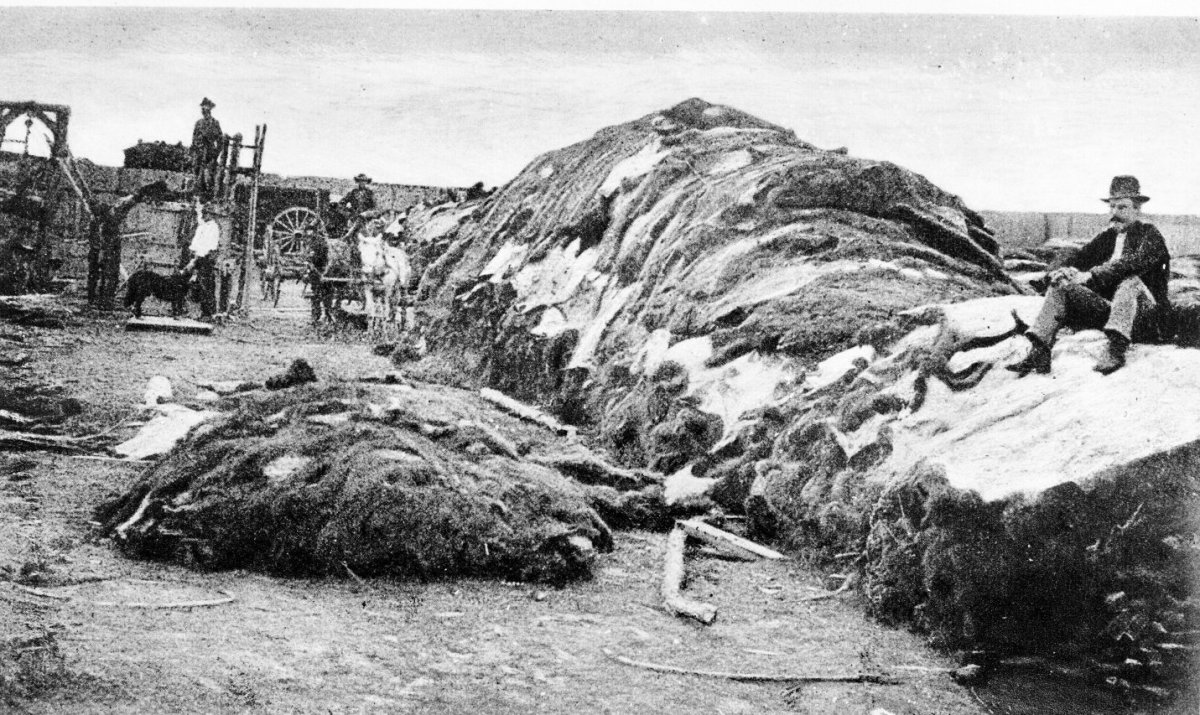 Charles Rath, famous buffalo hunter, seated on rick of 40,000 hides in Robert Wright's Dodge City hide yard in 1878, with M.W. (Doc) Anchutz (in white shirt, back).