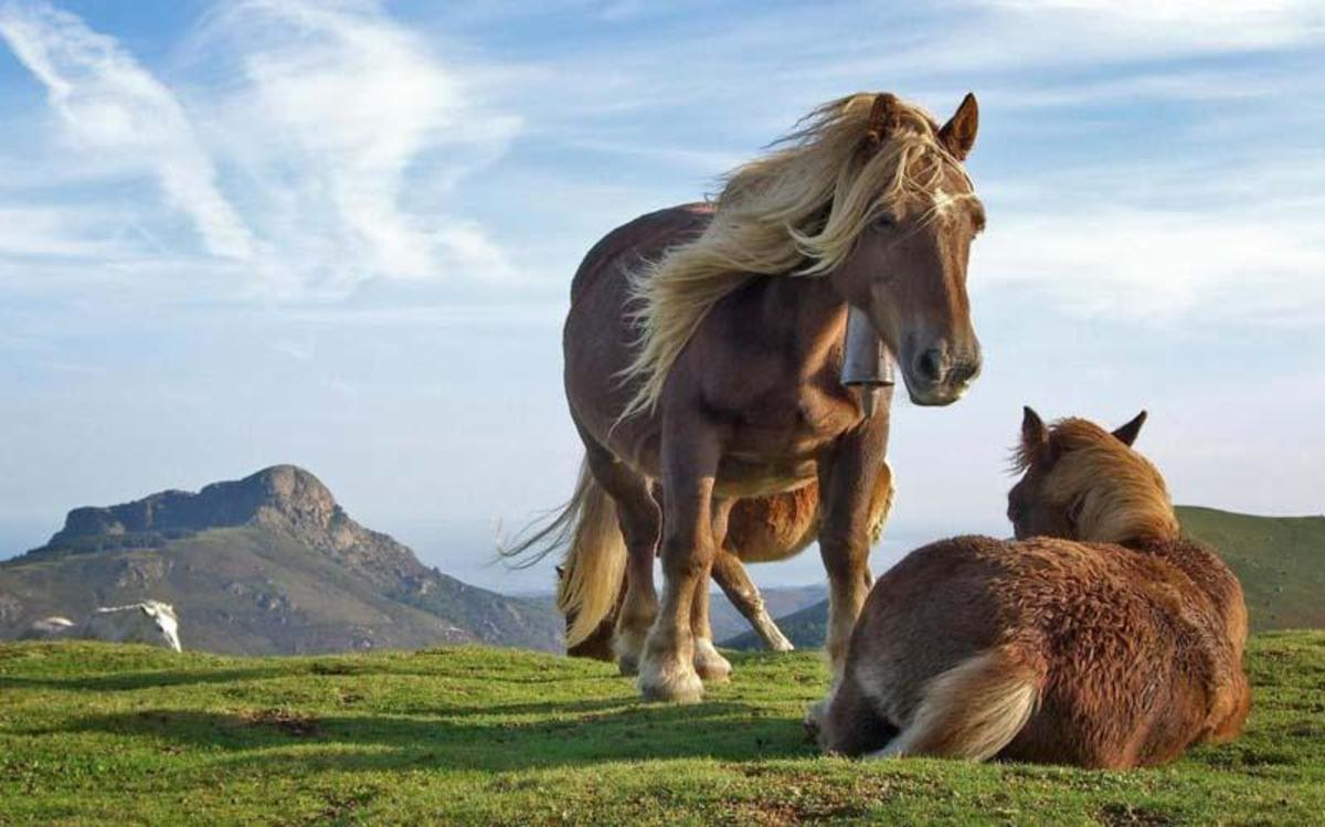 7 Wonderful and Fun Facts About Horses