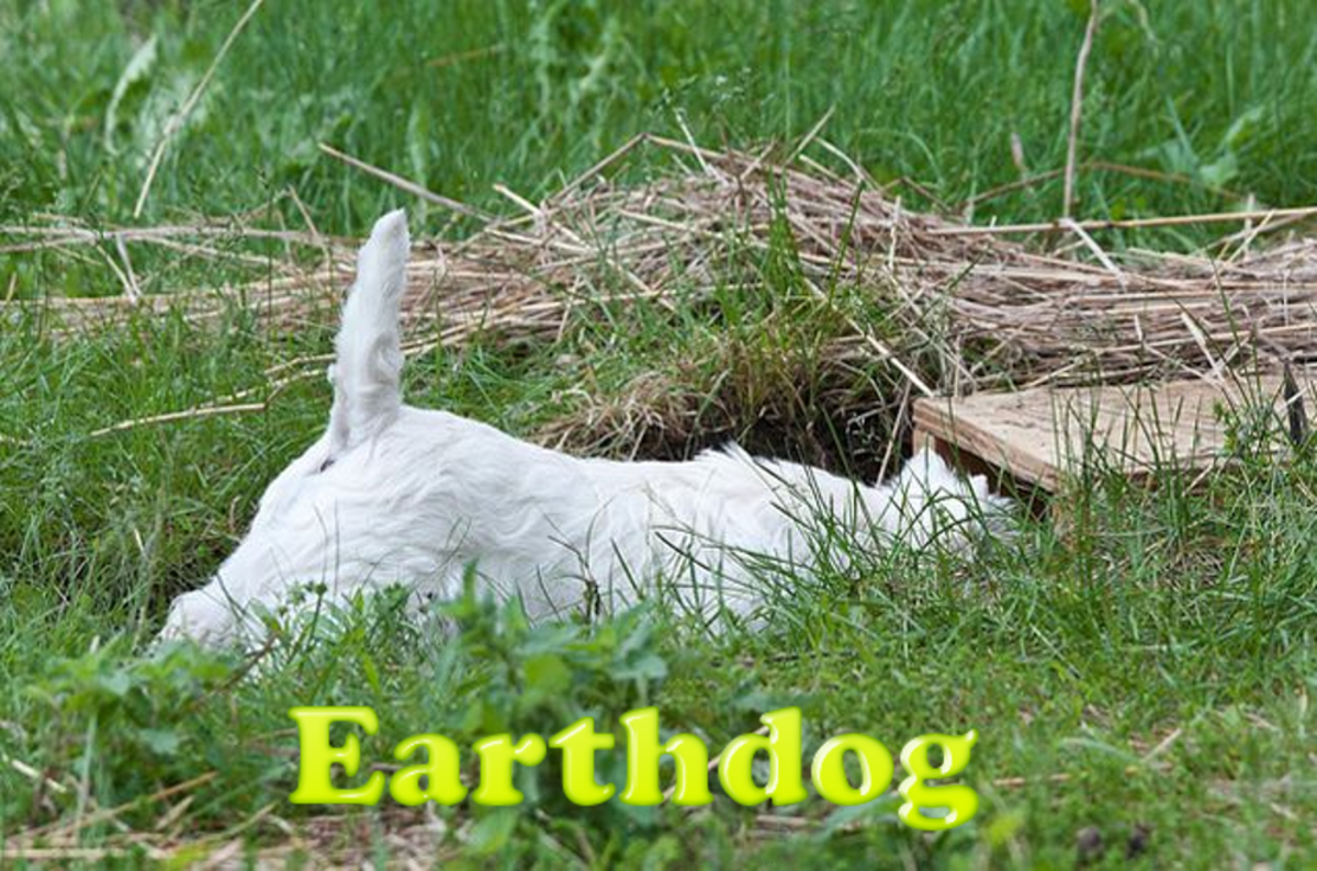 Earthdog on work