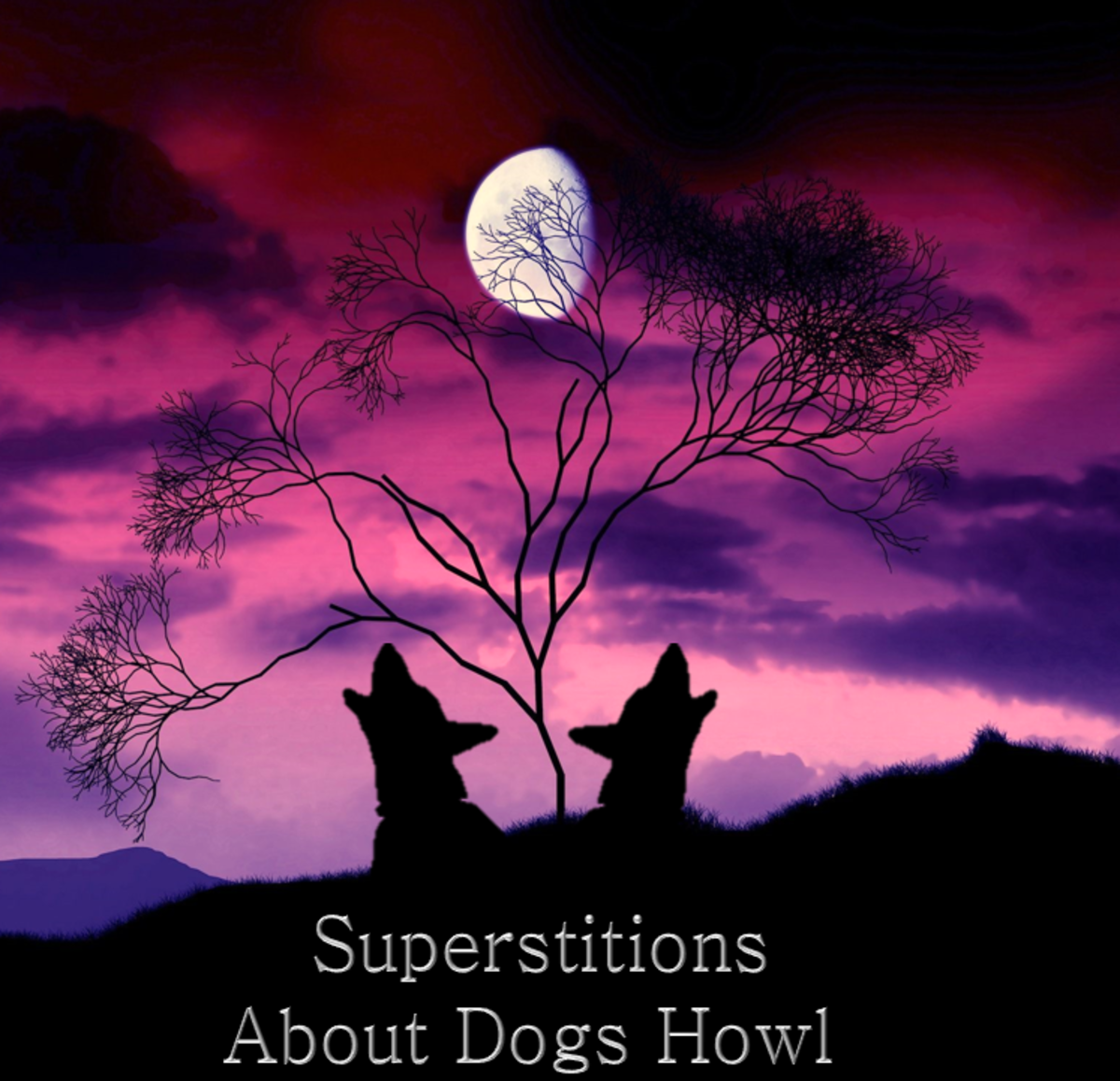 Superstitions About Dogs Howl
