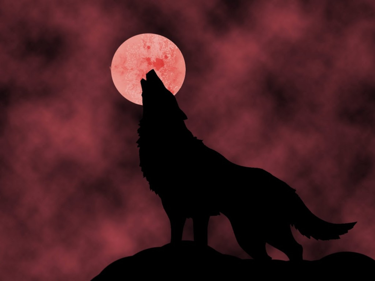 superstitions-about-dogs-howling