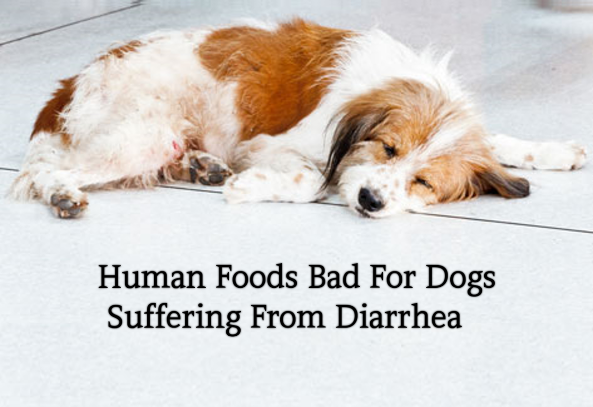 10 Human Foods Bad For Dogs With Diarrhea Or Upset Stomach Hubpages