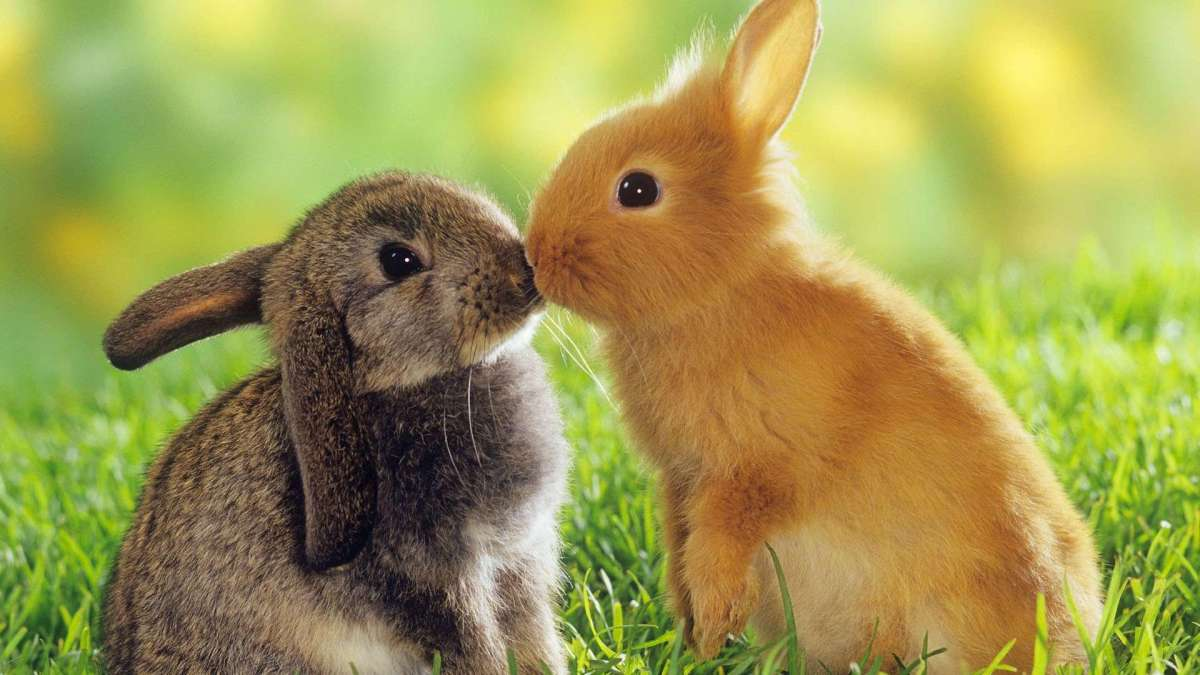 Look at pictures of cute bunnies.