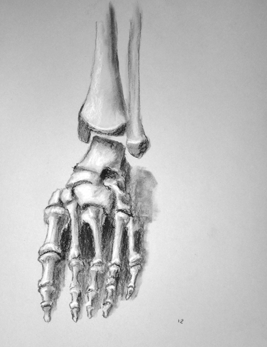 Bones of the feet.  Foot Exercise #12