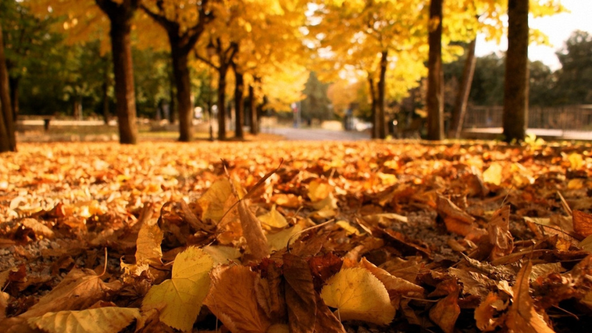 fall-playlist
