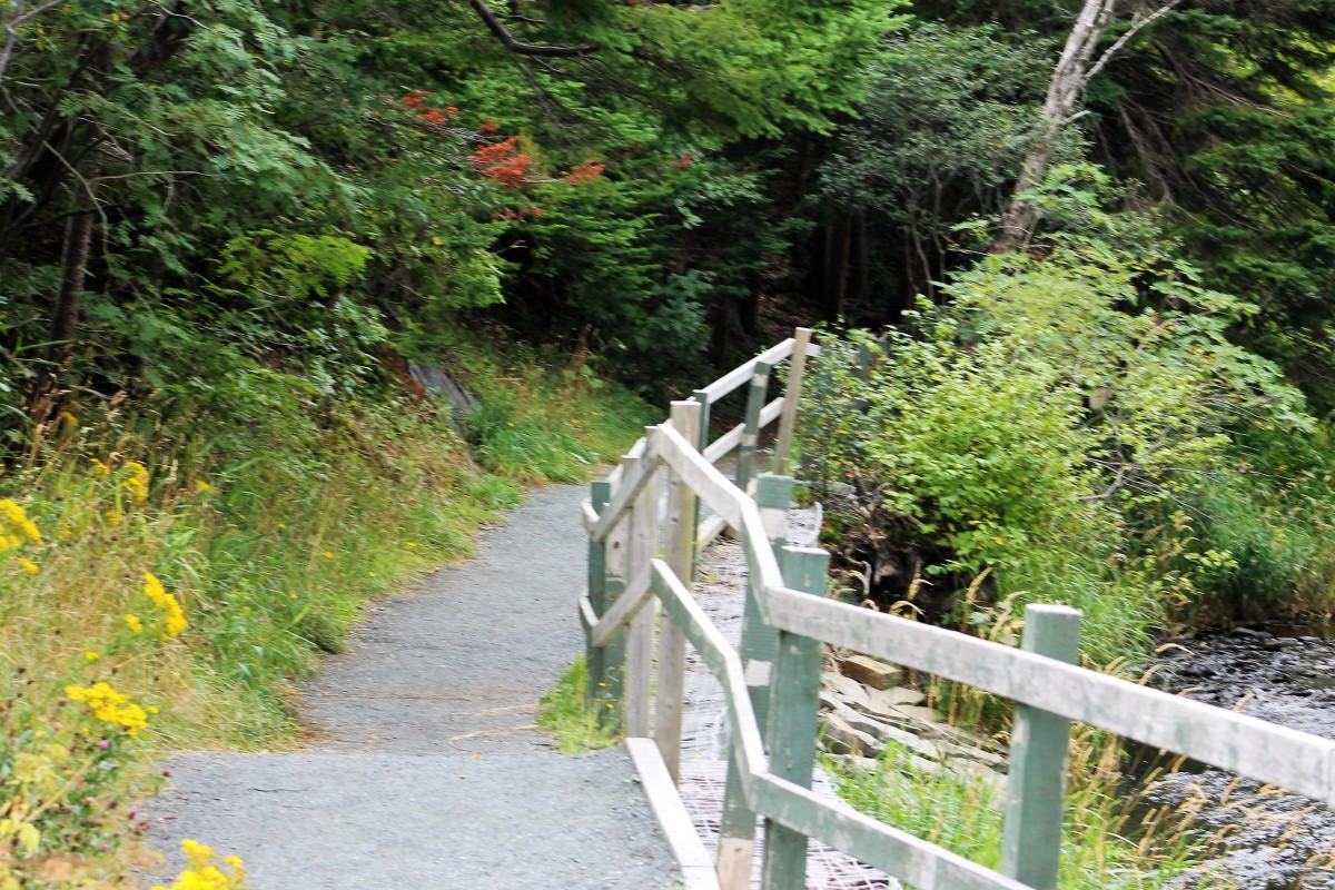 Section of trail along side the Waterford River.