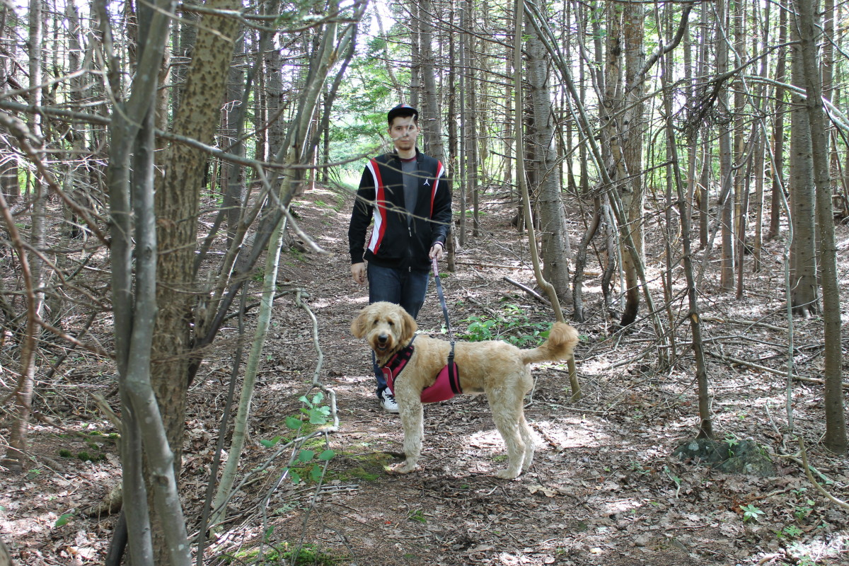 The authors son, Joshua, and Goldendoodle, Daisy, on a wooded trail in a section of the park's west end, on land that once belonged to former Newfoundland Prime Minister Richard Squires.