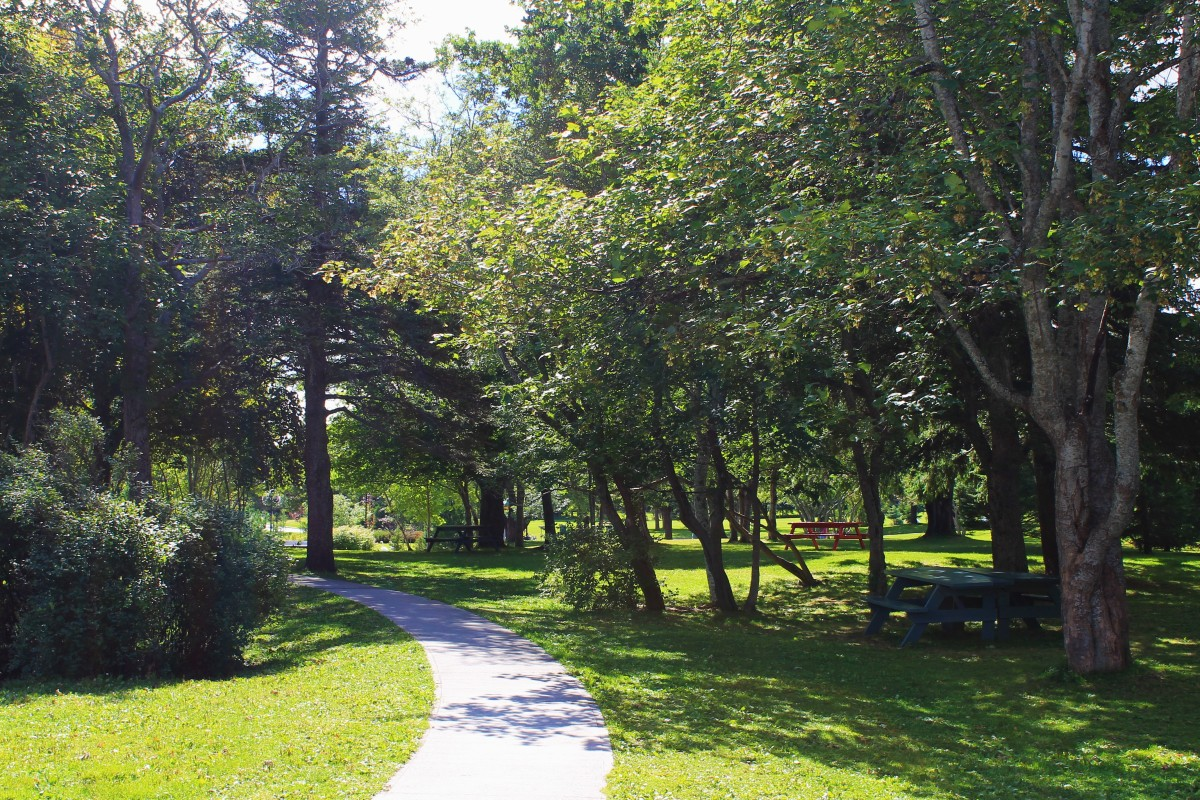 Section of trail through picnic area near the playground.