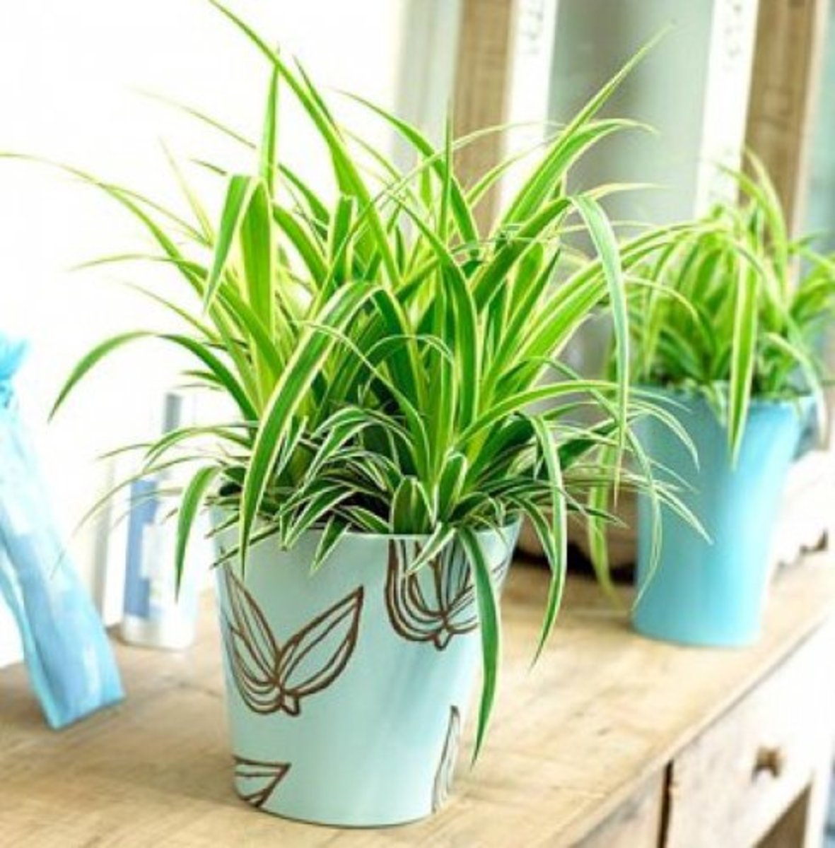 10-easy-houseplants-for-beginners
