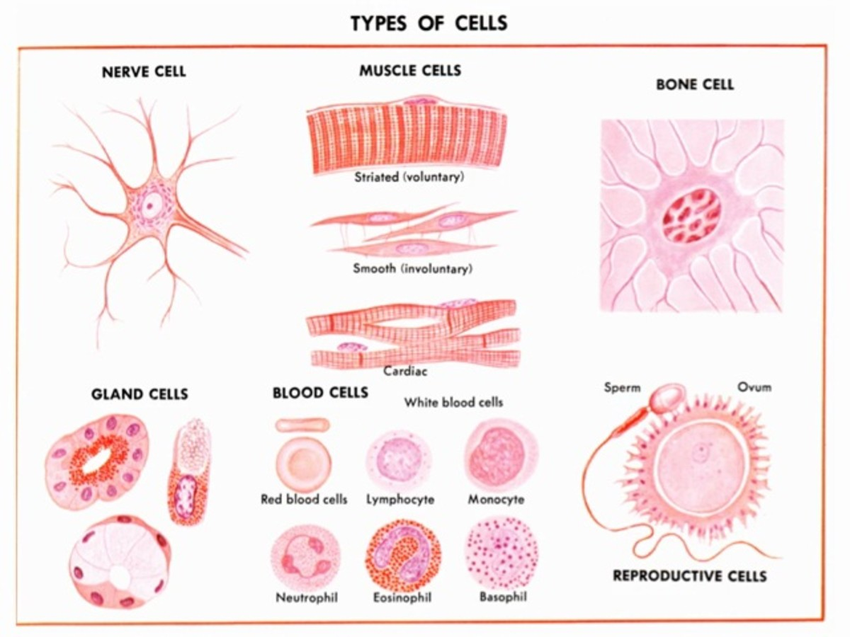 Cell: The Fundamental Unit of Life