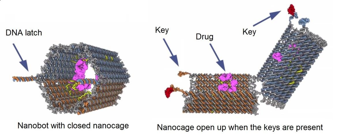 nano-robots-small-machines-to-solve-big-problems-of-medical-science