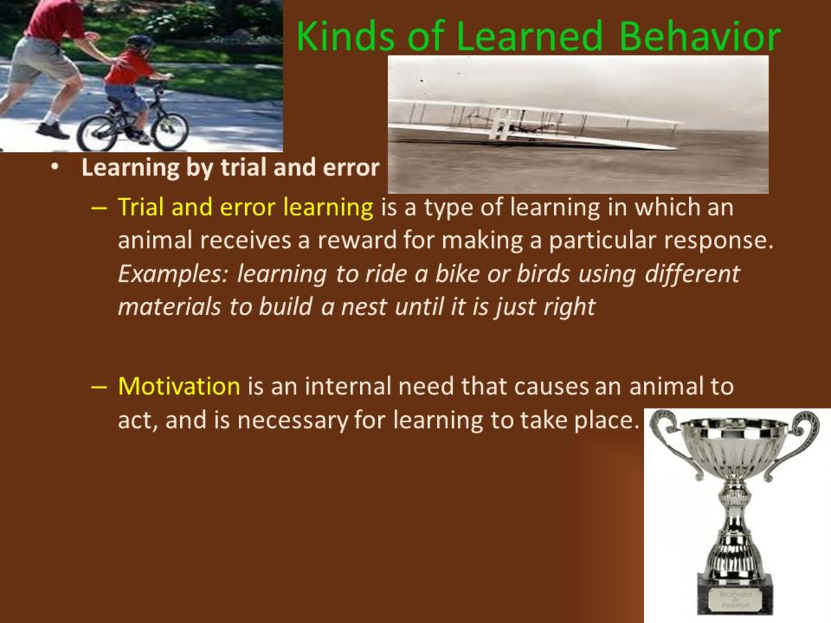 learning-through-trial-and-errors