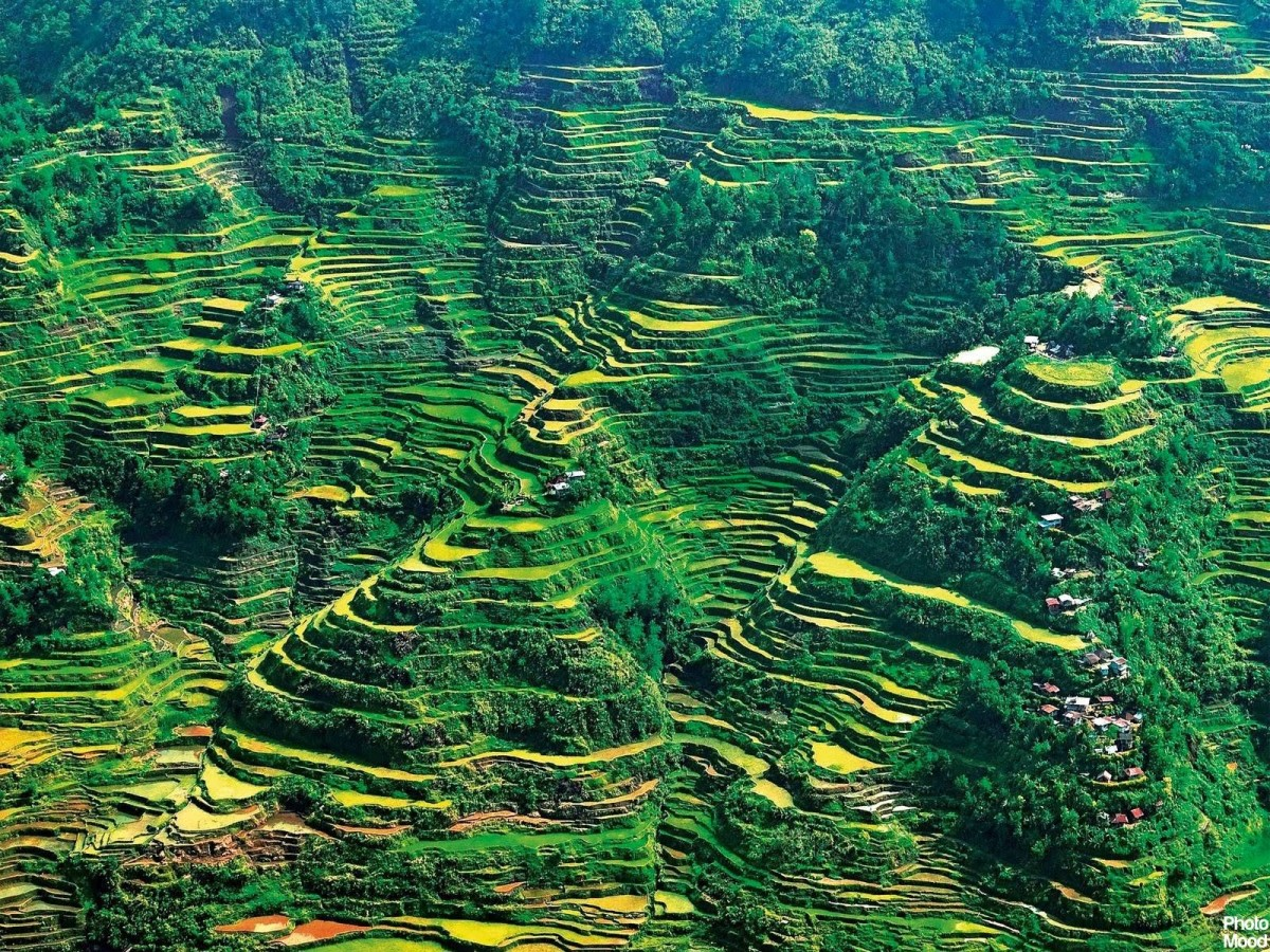 Amazing rice terraces in Benguet, Province