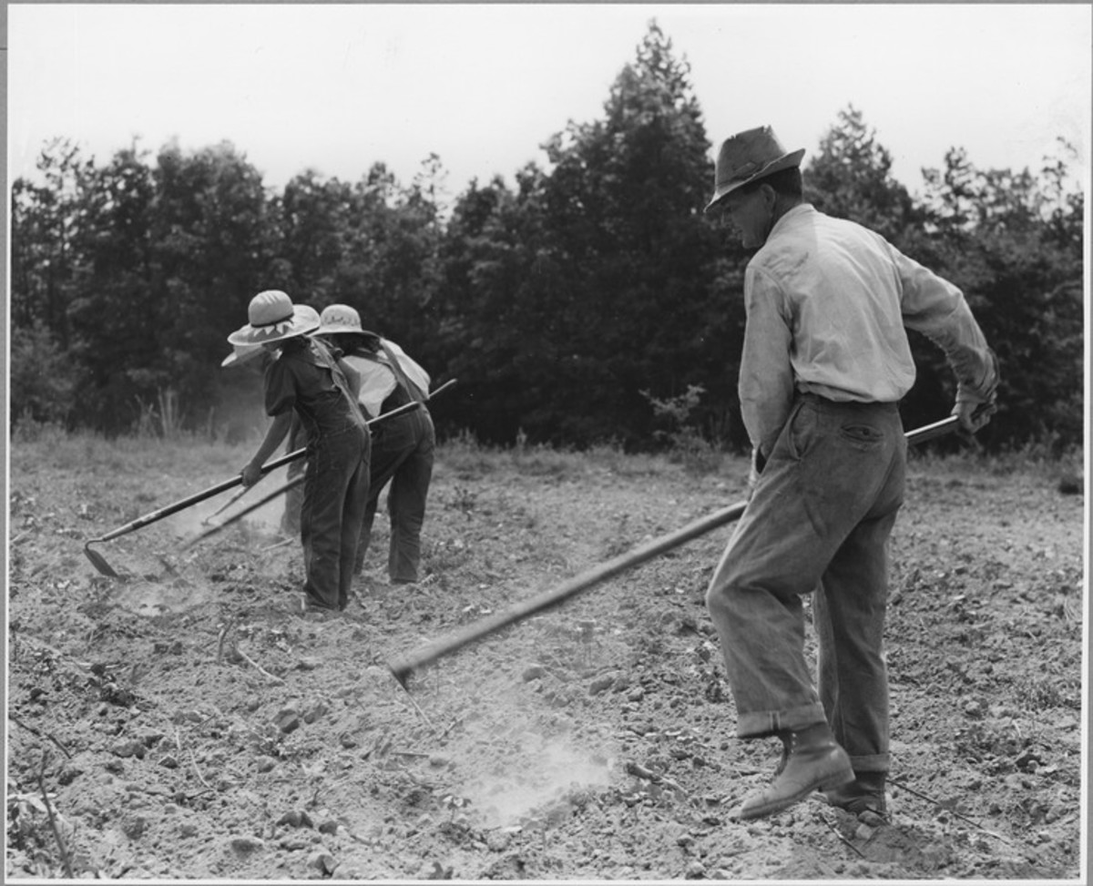 NARA record 5307166 Harmony Community Putnam County Georgian chopping cotton.