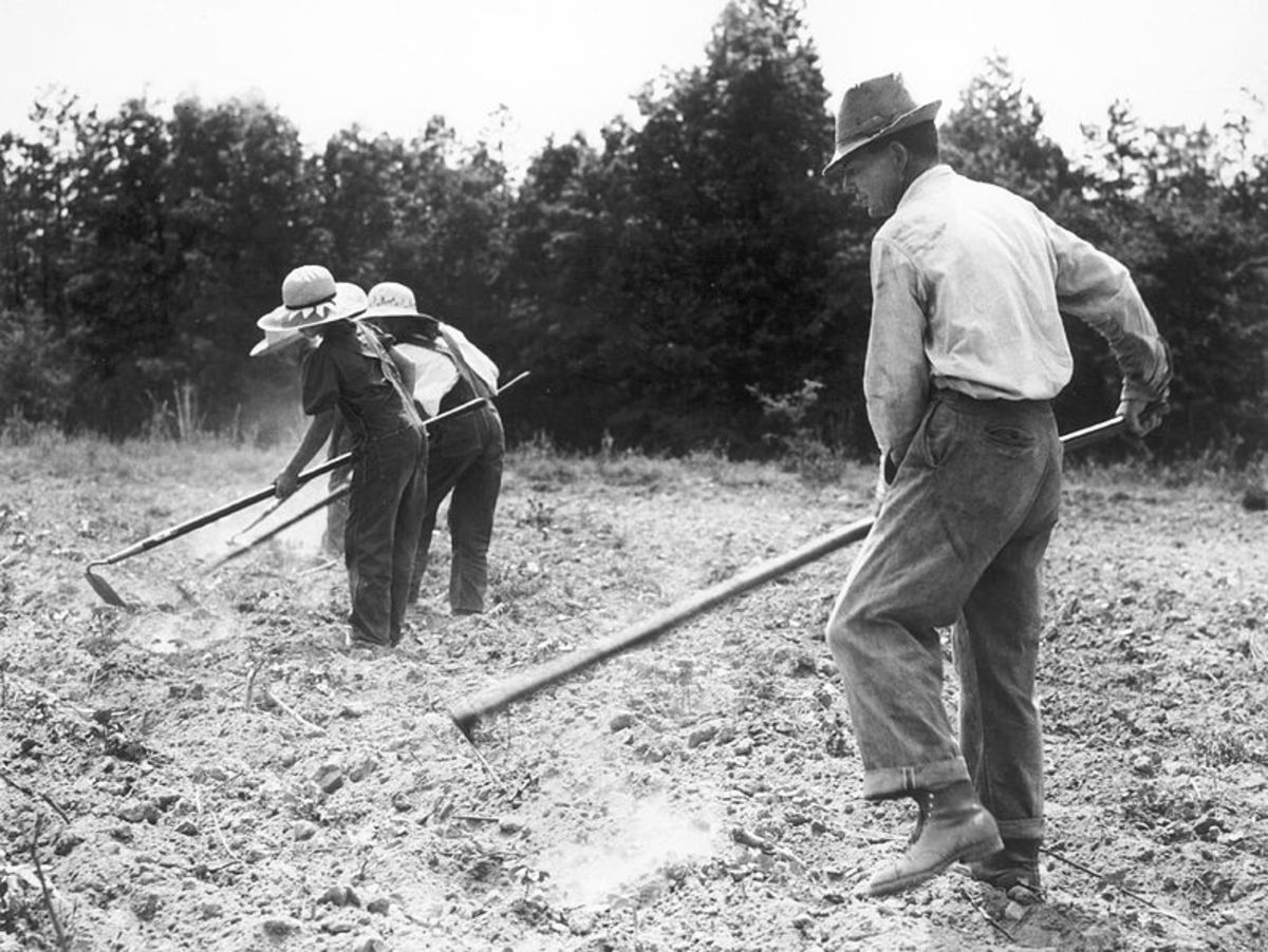 Many men, women, and families made money for food and other  necessities for chopping cotton for themselves or someone else.