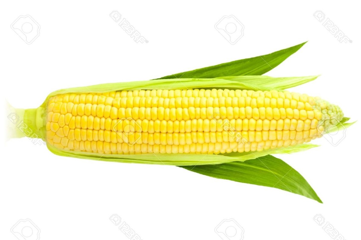 Horizontal Corn