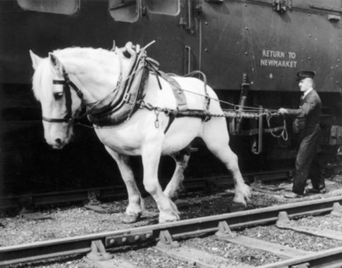 Shunting horse with driver. Horses used tended to be 'Shire' type, Clydesdales or Suffolks... Here a thoroughbred Clydesdale moves a horse box for throughbred racehorses